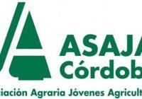 Asaja pide al nuevo Gobierno rebajar los módulos de IRPF para el olivar en Córdoba
