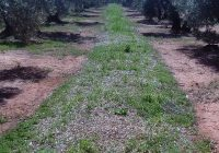 Abonado un pago adicional de 6,7 millones a la agricultura ecológica, medidas agroambientales y zonas con limitaciones