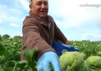 VÍDEO: El Gobierno reduce el IRPF de 2017 por la sequía