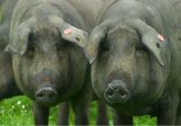 La UE respalda una campaña histórica de ASICI para fomentar el consumo y las exportaciones de jamones ibéricos hasta 2020