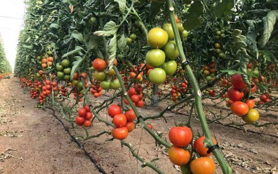 La firma almeriense Ecoculture Biosciences revoluciona el manejo de la fertilización nitrogenada con su tecnología NHDelta