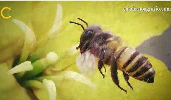 Las colecciones de los museos desvelan un declive del 30 por ciento en las abejas de España