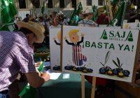 ASAJA-Sevilla exige a la Comisión Europea que defienda también la aceituna negra y le demanda ayudas para paliar las pérdidas