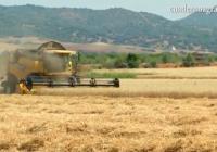 VÍDEO: Recolección de trigo en Lora del Río, Sevilla