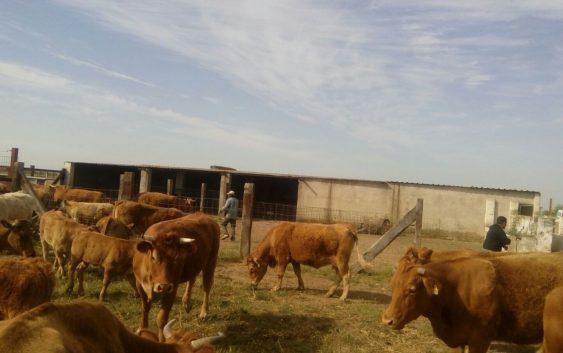 La Conferencia Sectorial de Agricultura y Desarrollo Rural acordó la distribución de 289,7 millones de euros entre las CCAA