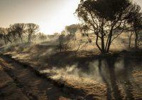 El Ministerio de Agricultura invierte un millón de euros en las obras de restauración del incendio forestal ocurrido en el entorno de Doñana
