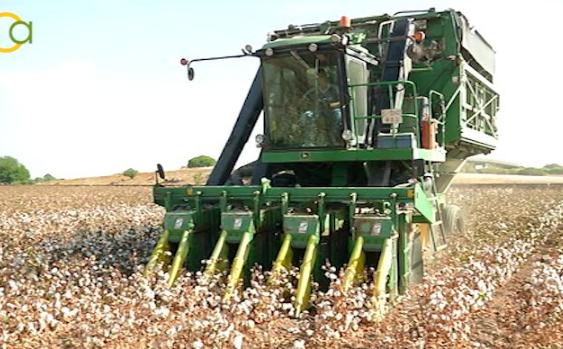 COAG Andalucía recuerda que la política agraria y empleo son claves para un medio rural vivo