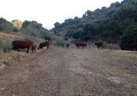 Agricultura abre el trámite de información pública del Plan de Ganadería Extensiva de Andalucía