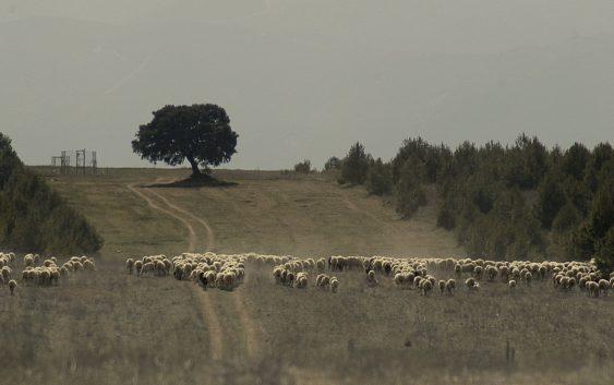 COAG Andalucía destaca la importancia de la actividad agraria y ganadera en la prevención de incendios forestales