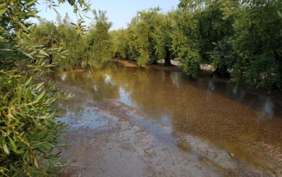 Las tormentas registradas en la tarde de este lunes provocan daños en el olivar y viña de Montilla