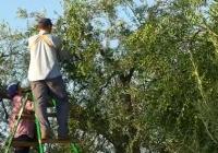 """COAG Andalucía: """"Ha sido una campaña de verdeo más tardía y difícil"""""""