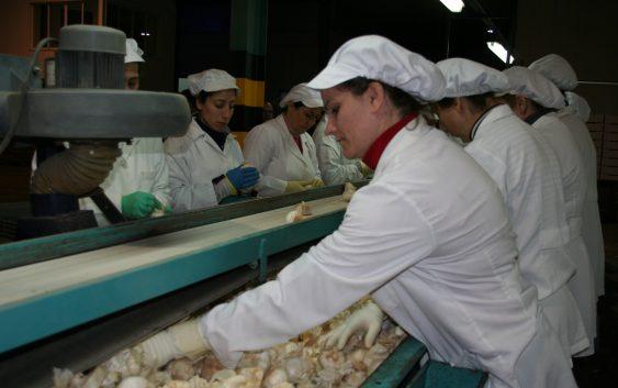 Andalucía cierra la campaña de ajo con un incremento del 10% tanto en superficie cultivada como en producción