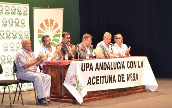 UPA Andalucía se reúne con el Consejero y los productores de aceituna de mesa para buscar solución a los bajos precios