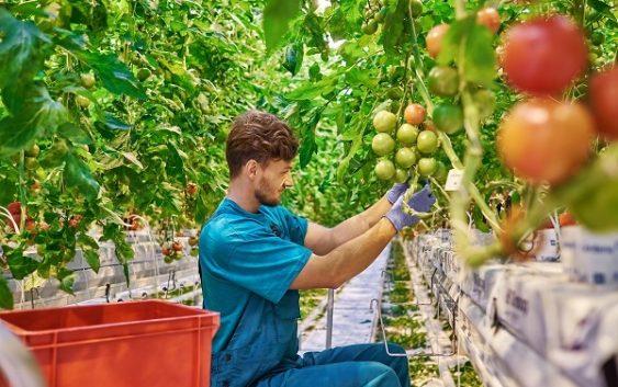 Agricultura pone a disposición de los jóvenes del medio rural 30 millones de euros más en ayudas para la creación de empresas