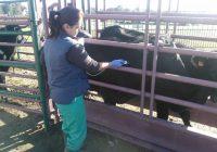 La Junta invierte cuatro millones de euros en ayudas para la ejecución de programas sanitarios en la ganadería andaluza