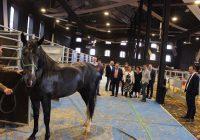 Andalucía es la primera comunidad autónoma en número de caballos de pura raza española con el 43,9% del total nacional