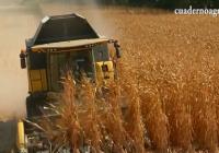 VÍDEO: Recolección del maíz en la Vega del Guadalquivir