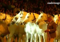 VÍDEO: XXVIII edición de SICAB · Salón Internacional del Caballo PRE en Sevilla