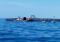 La Junta abre la convocatoria 2019 para ayudas a la transformación de los productos de la pesca y acuicultura