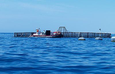 Abierto el plazo para solicitar las ayudas 2019 para el desarrollo sostenible de la acuicultura, con 11,4 millones