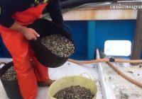 VÍDEO: Reapertura del caladero de chirla del Golfo de Cádiz