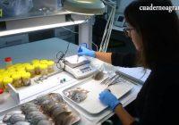 VÍDEO: Agua del Pino, Centro de Acuicultura del Ifapa en Cartaya