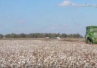 VÍDEO: Balance de la campaña de algodón en Andalucía