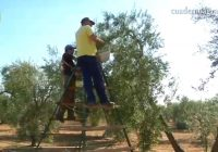 VÍDEO: Balance de la campaña de verdeo en Andalucía