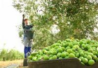 Agricultura amplía el plazo de solicitud de las ayudas para jóvenes y modernización de invernaderos hasta enero de 2019
