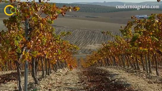 El plazo para solicitar las ayudas a la promoción del vino en terceros países se cierra el próximo lunes
