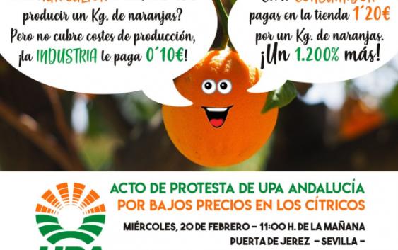 UPA Andalucía y los productores de cítricos se concentran contra los bajos precios en Sevilla