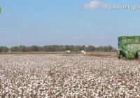 VÍDEO: Plazos y novedades del Plan de seguros agrarios para este inicio de 2019