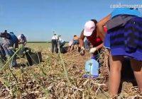VÍDEO: 8-M: situación de las mujeres en el medio rural