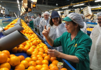 Carmen Crespo anuncia la concesión de ayudas por 6,4 millones para potenciar el sector agroindustrial de Córdoba