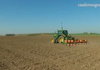 VÍDEO: Se reduce la superficie sembrada de girasol