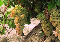 La Sectorial del Vino de Cooperativas Agro-alimentarias de Cádiz reclama el uso del sello de calidad de la DO Jerez-Xérès-Sherry
