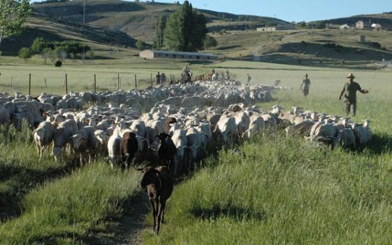 Abierto el plazo para solicitar plaza en la novena edición de la Escuela de Pastores de Andalucía, que se celebrará en Ronda