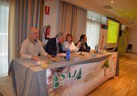 Las exportaciones de aceite de oliva español marcarán un nuevo récord cuando se cierre la campaña de comercialización 18/19