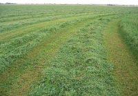 Agroquivir y Cooperativas Agroalimentarias de Sevilla trabajan para conseguir una ayuda asociada a la alfalfa