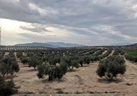 Asaja-Jaén confía en que las lluvias enmienden los campos y los pantanos