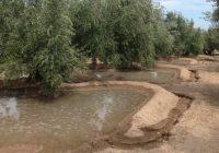 UPA Jaén y ASARE confían en que las dotaciones para los riegos extraordinarios se aumenten gracias a las últimas precipitaciones