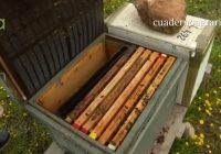 VÍDEO: Campaña apícola en Andalucía