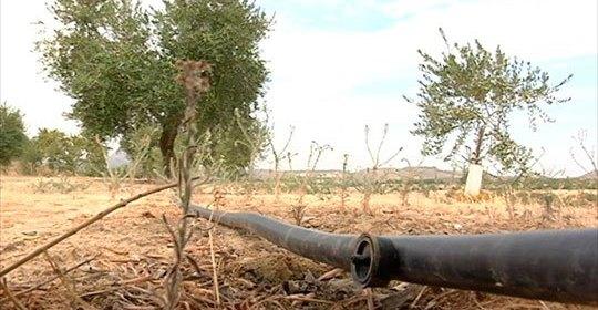 Asaja Córdoba pide que se exima del canon de riego a todos los cultivos al igual que al arroz