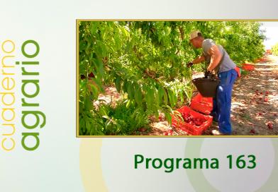Cuaderno Agrario PGM 163
