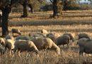 UPA Andalucía puntualiza las ayudas que la Consejería de Agricultura ha anunciado para ganadería