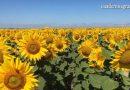 VÍDEO: Proyecto europeo Life Agromitiga