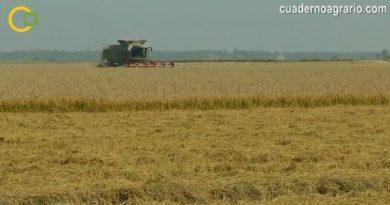UPA Sevilla agradece el esfuerzo realizado por la CHG para aumentar la dotación de riego para el arroz