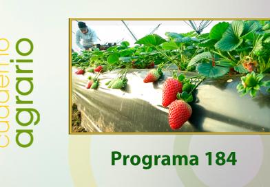 Cuaderno Agrario PGM 184