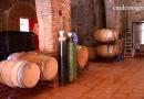 VÍDEO: Análisis de la situación del sector del vino en Andalucía