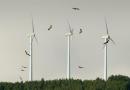 Ecologistas en Acción: «Es urgente impulsar un modelo de energía renovable respetuoso con los ecosistemas y el territorio»
